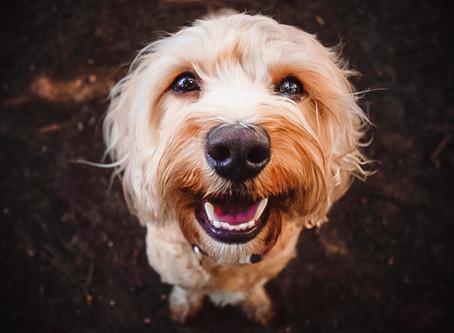 Pet Photography website finally online again!