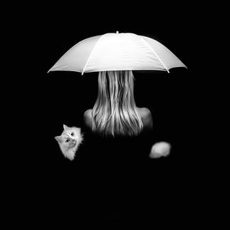 white cat umbrella