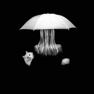 white cat umbrella