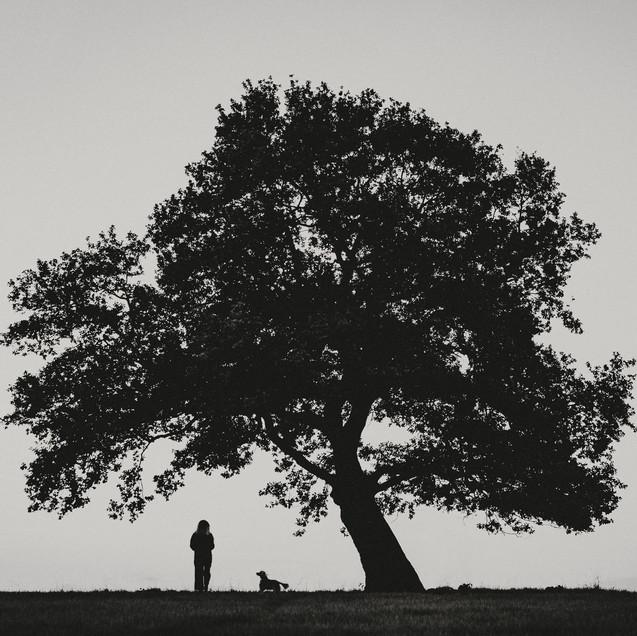 tree dog woman