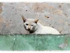 Urban Feline Street Photography