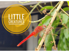 Creepy Crawlies and Assorted Little Critters