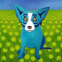Blue Dog in Field