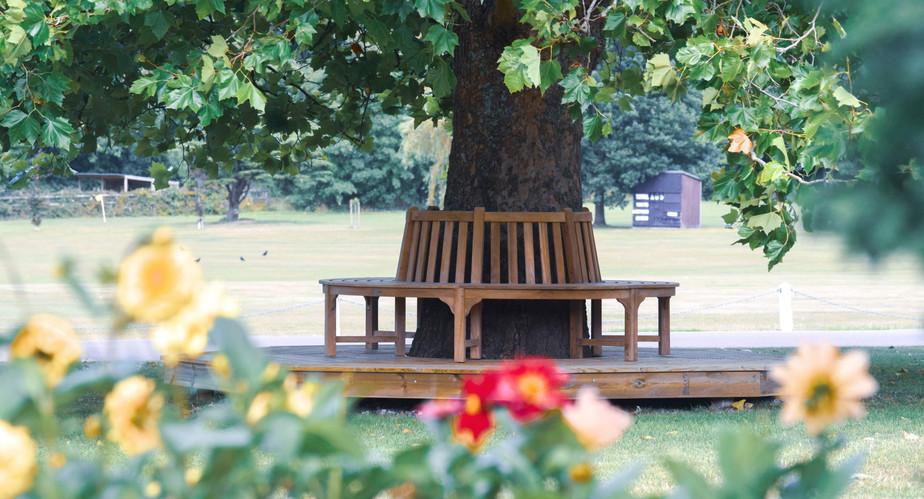 Circular wooden bench