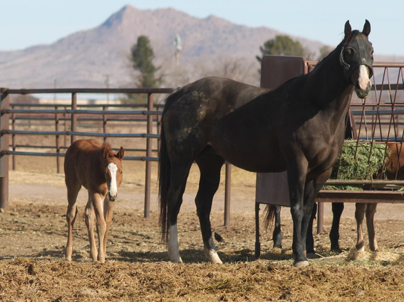Flash Em The Jewels Filly 2020