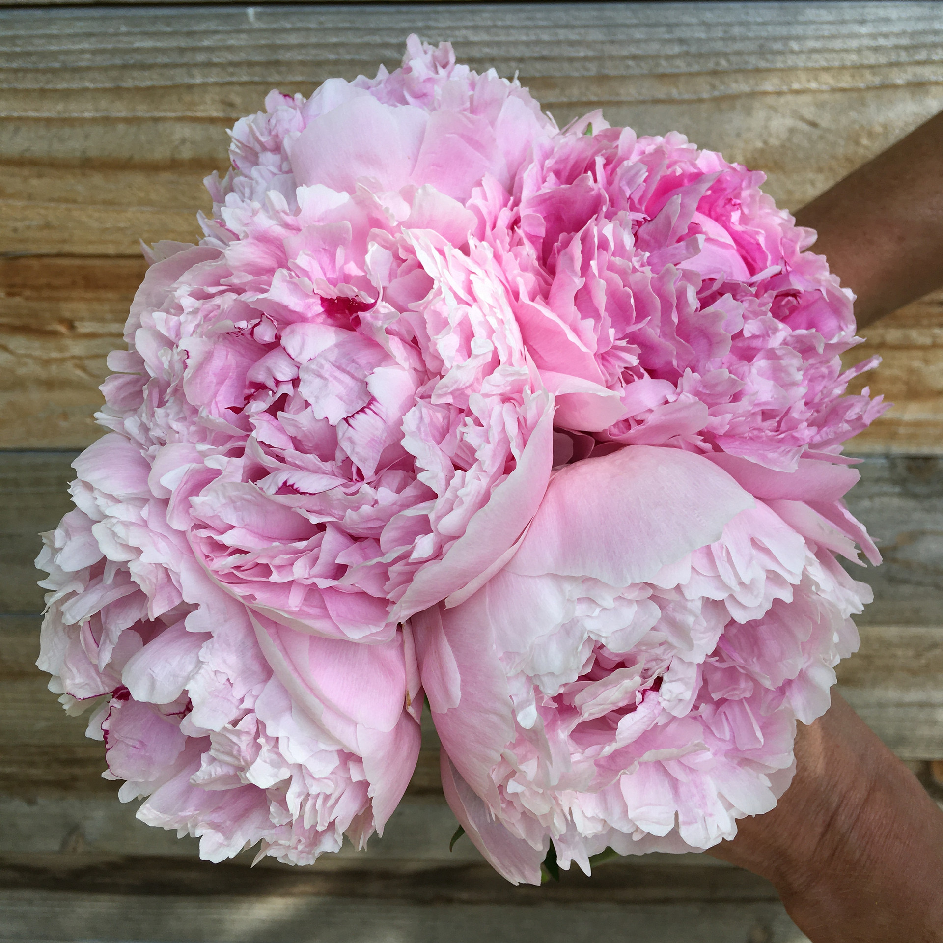 Sarah Burnhardt Bouquet