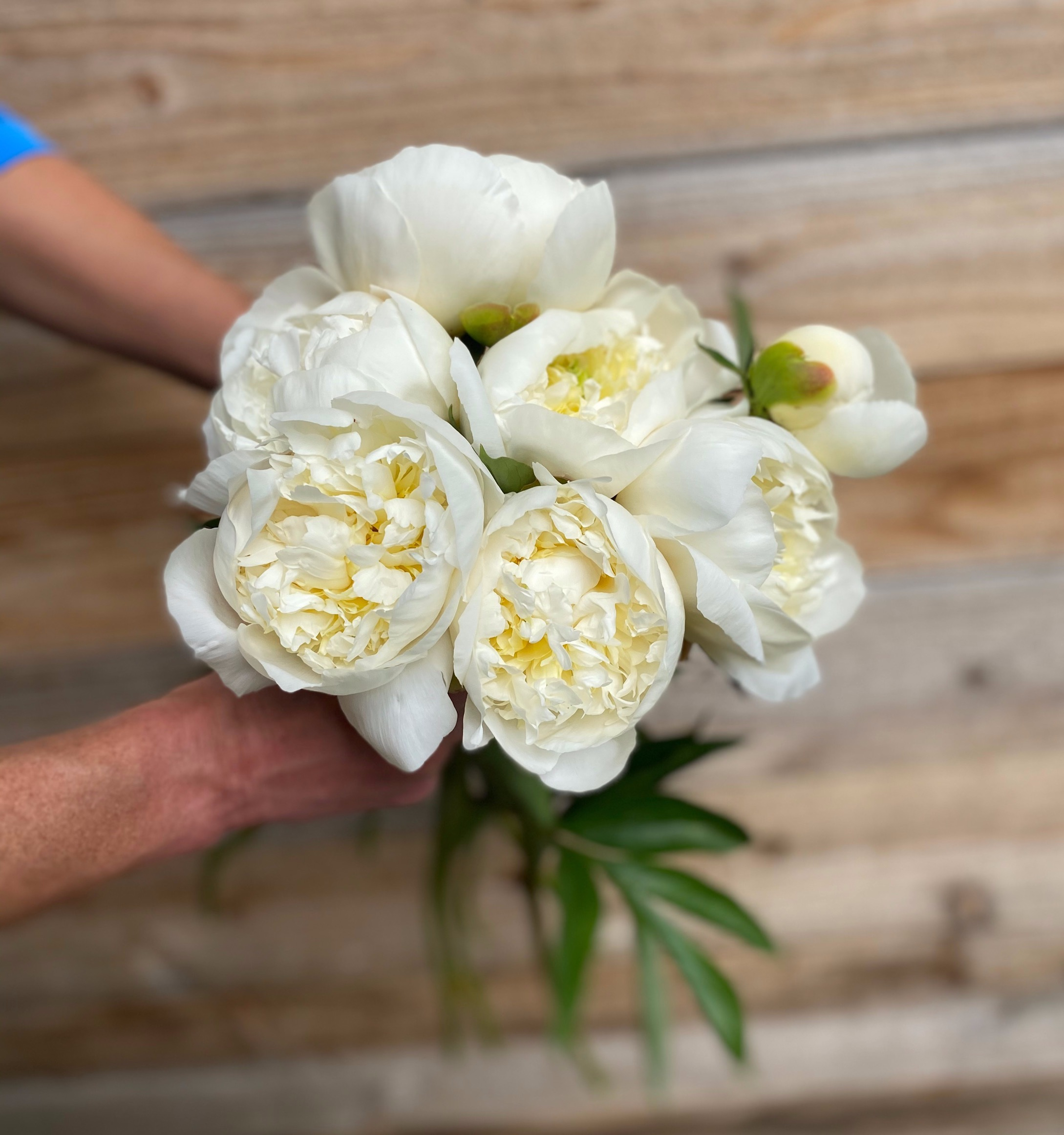 Early White Peony