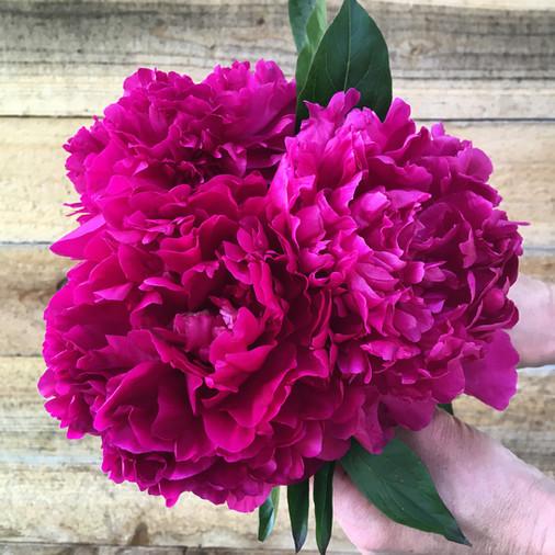 Felix Crousse Bouquet