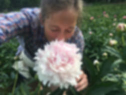 Alaska Peony Flowers - Amy.JPG