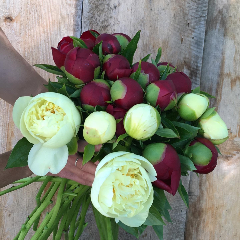 Red Charm & Lemon Chiffon Bouquet 2020.JPG