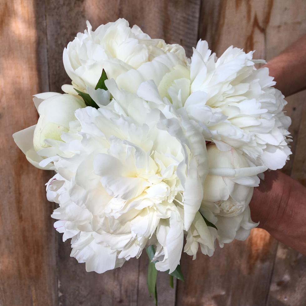 Elsa Sass Bouquet