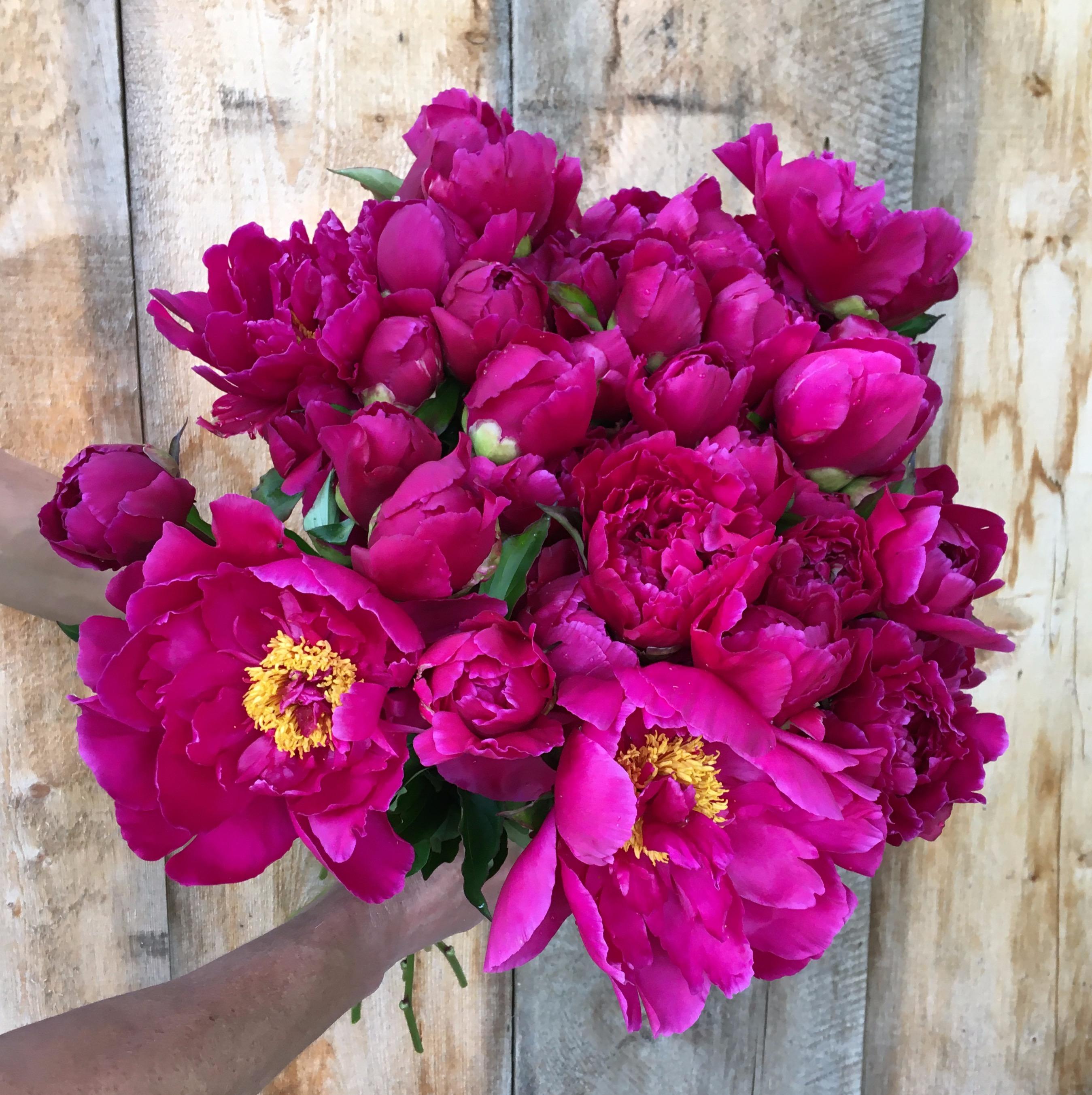 Victoire de la Marne Bouquet