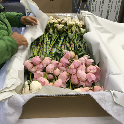 Packaging Peonies, 2020