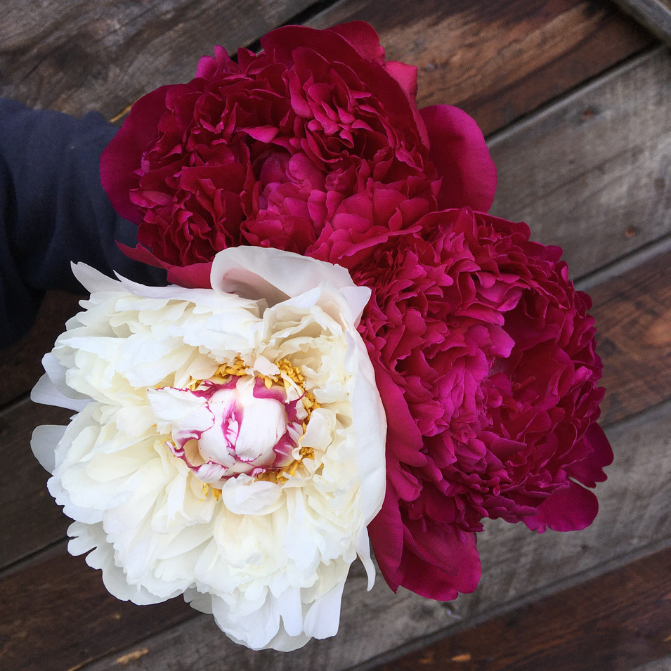 Felix & Festiva Bouquet