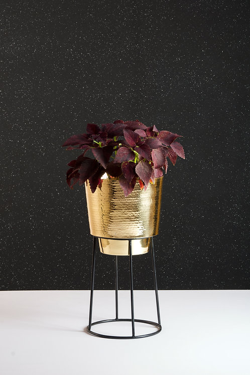 Planter Medium