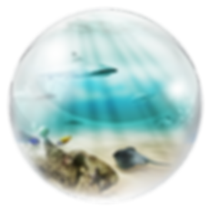 Planete_environnement_detourée.png