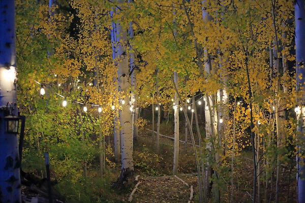 921A9678 - Lights (1).jpg