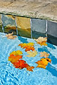 Fall Pool.jpg