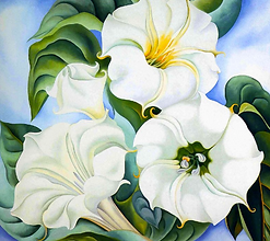 Jimson Weed - by Georgia O'Keeffe