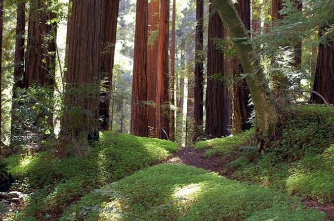 glen-oaks-big-sur.jpg