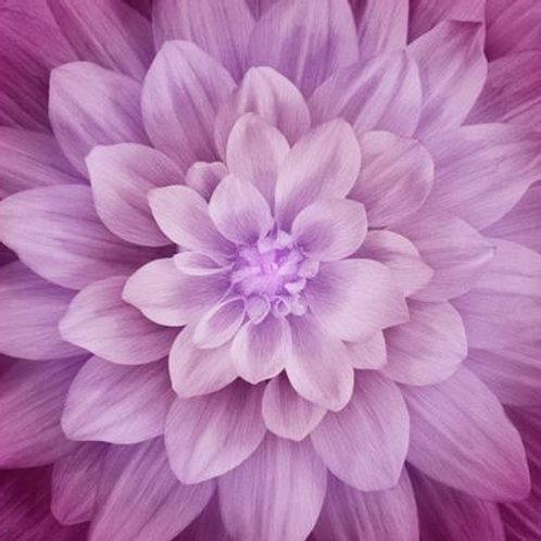 Hoffman Dream Big Magenta Flower Panel