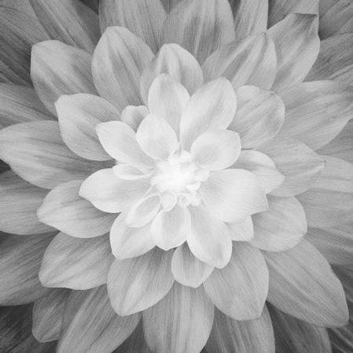 Hoffman Dream Big Onyx flower panel