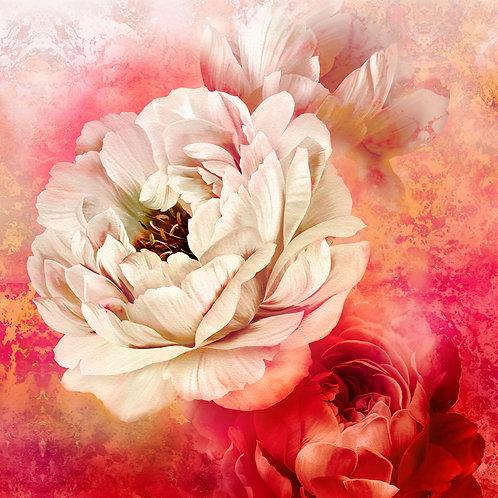 Royal Beauty - Blossom