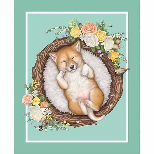 Native Nursery - Dingo