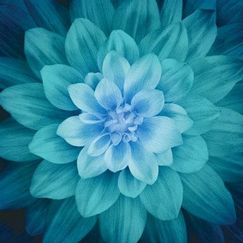 Hoffman Dream Big Teal flower panel
