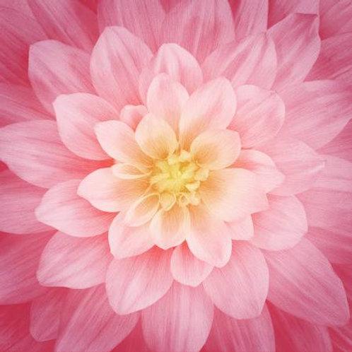 Hoffman Dream Big Rose flower panel