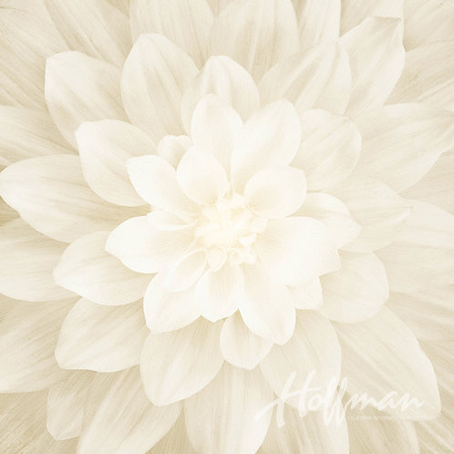 Hoffman Dream Big ivory flower panel