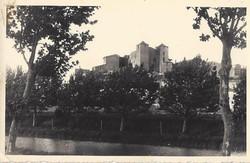 Jeunes patanes du canal devant le chateau