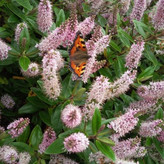 Butterfly & Hebe.jpg