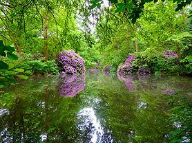 Bäume,-Schönheit,-Energie....jpg