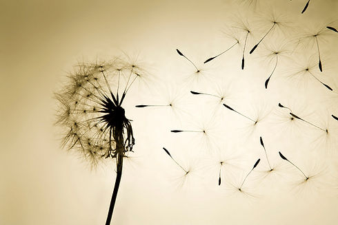 Dandelion-Hope.jpg