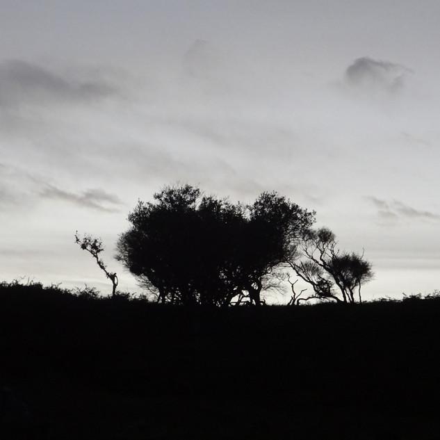 Trees at Dusk.jpg