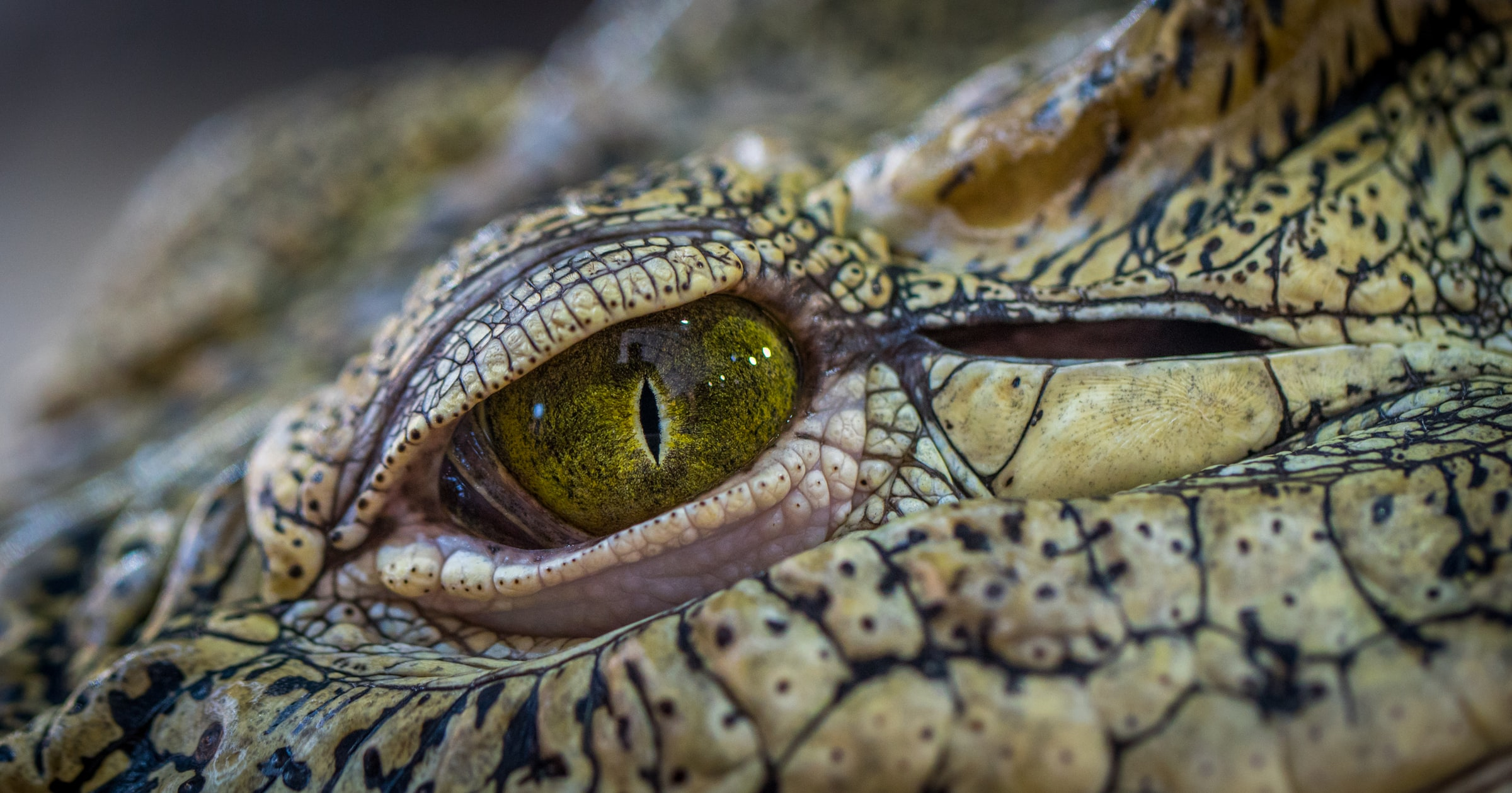 A Hot Summer of Crocodiles