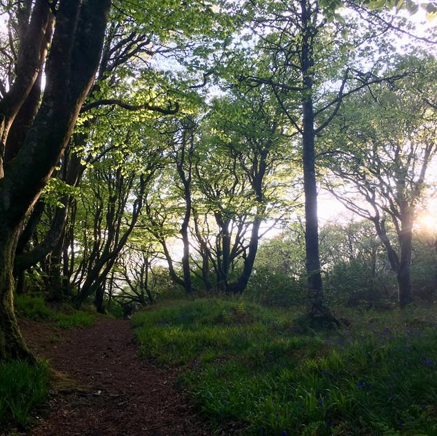 Cairnmore Woods.jpg