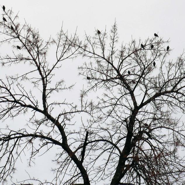 birds before freeze.jpg