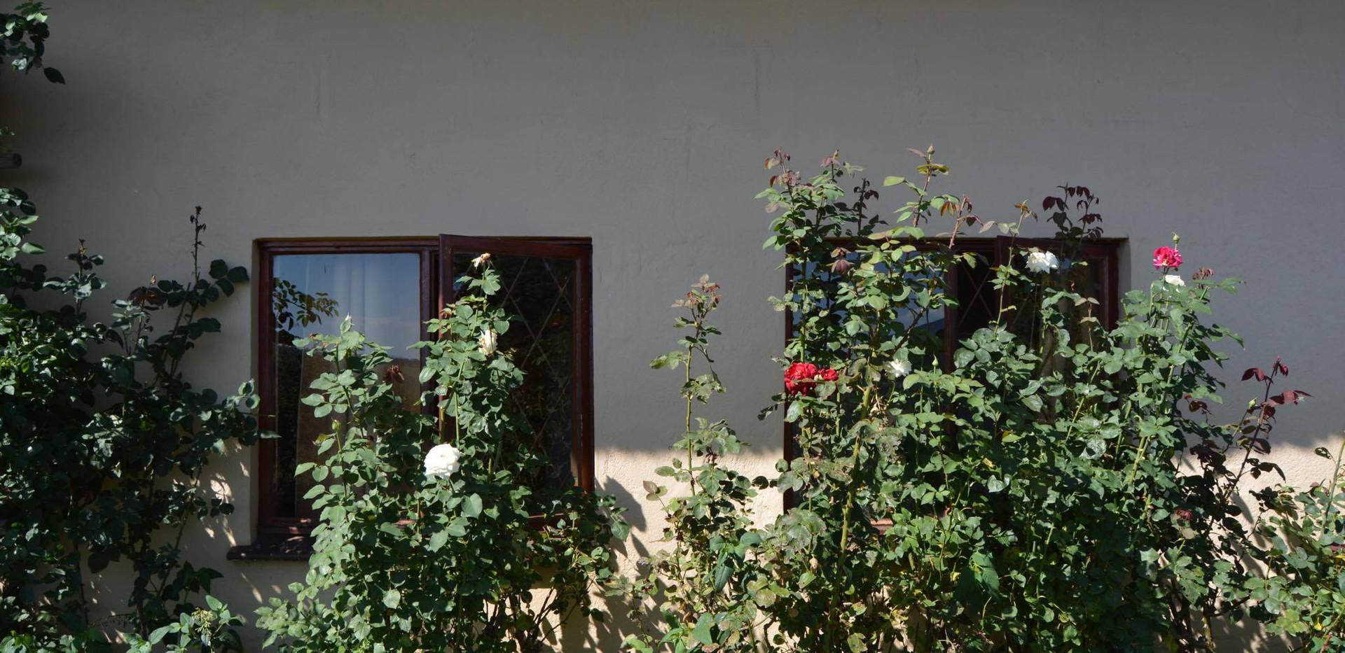 Downstairs bedroom windows