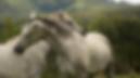 horses%20in%20the%20Drakensberg%0A_edite