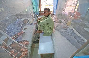 dengue pakistan.jpg