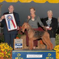 Phil-BIS-Devon-Dog-Show-Assoc-10-8-16-Mr