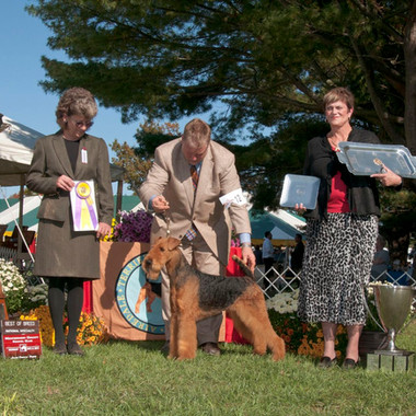Bunny-Best-of-Breed-Montgomery-2011-2_we