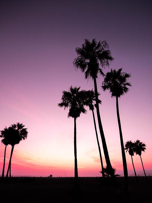 .:palm trees
