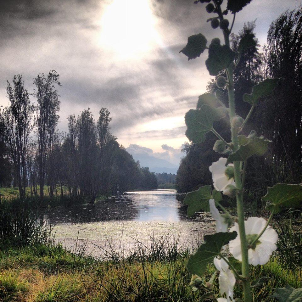 Esta foto la tomé un día que fui a correr a Cuemanco, desgraciadamente no se capta lo increíble que estaba el cielo y la luz que alumbraba a la flor...uno de esos momentos de los que hablo...en donde me sentía conectada en el aquí y ahora, con la naturaleza, con la vida....