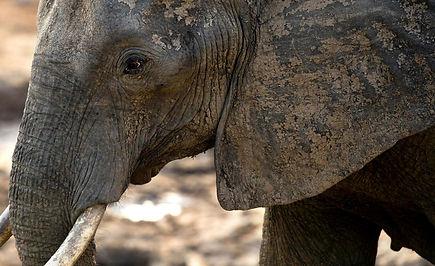 elephant_trophy.jpg