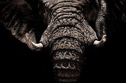 elephant-2894633_1920.jpg
