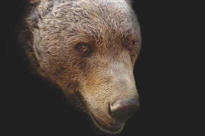 bear-1279112_1920.jpg