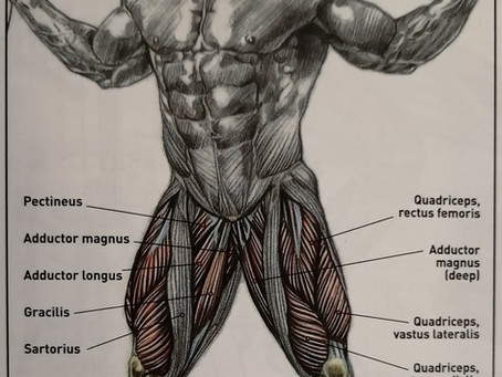 FOOT POSITIONS FOR LEG TRAINING